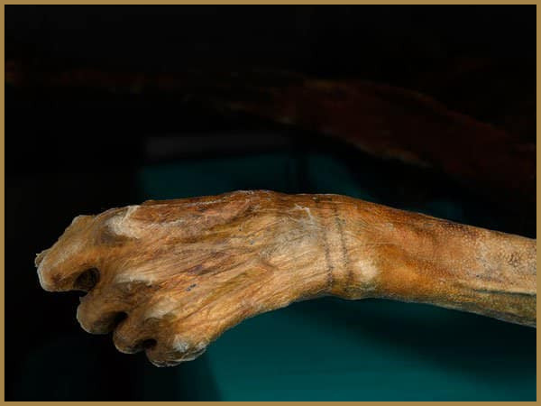 Tattooed wrist of Otzi the Iceman